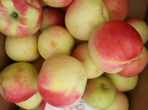 Taste all the different varieties of apples this Saturday!