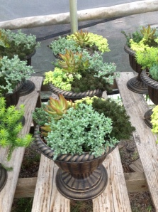 Gorgeous urns, window boxes, planters and hanging baskets from Hillcrest Nursery.